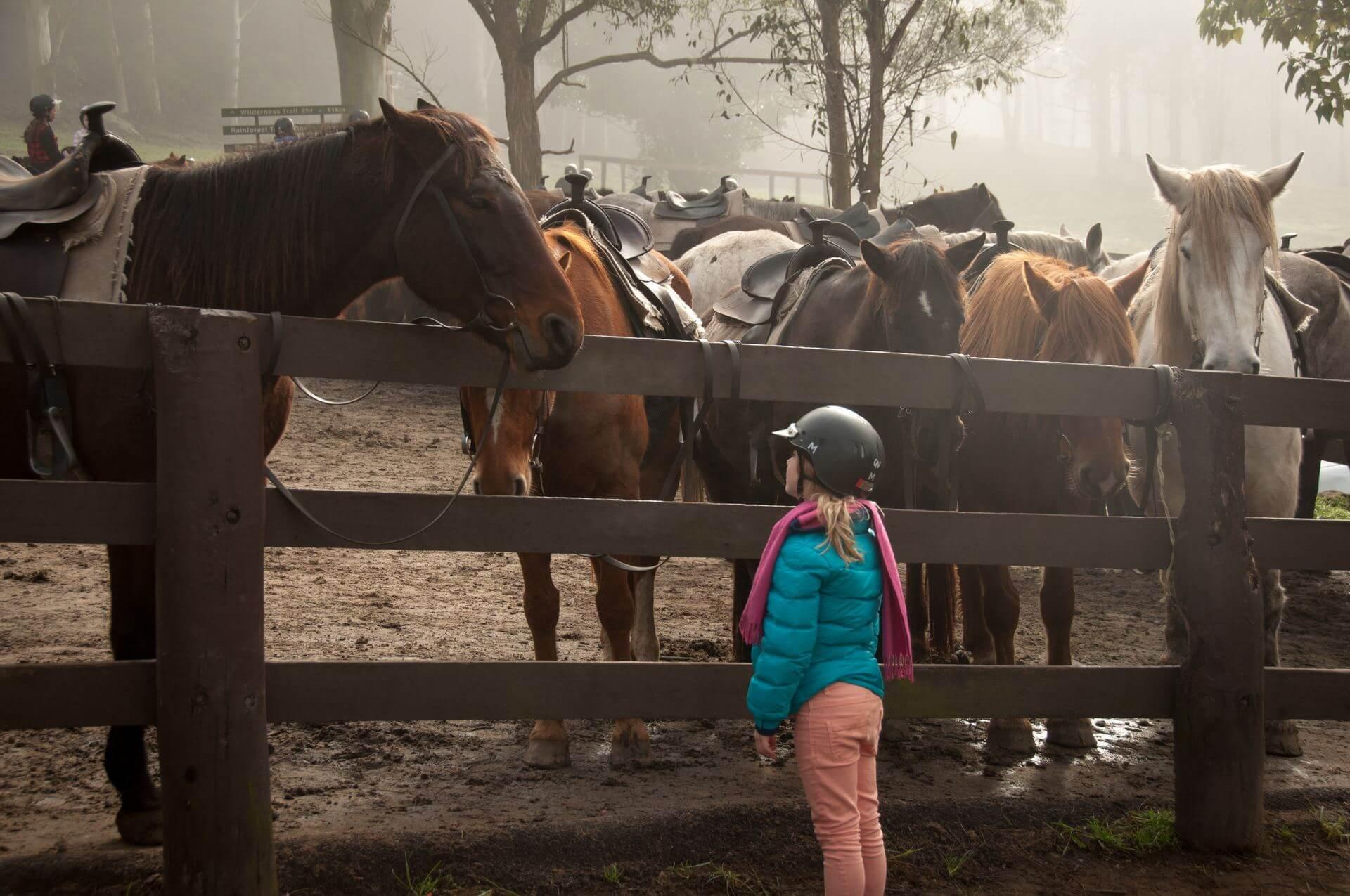 Научиться общаться с лошадью