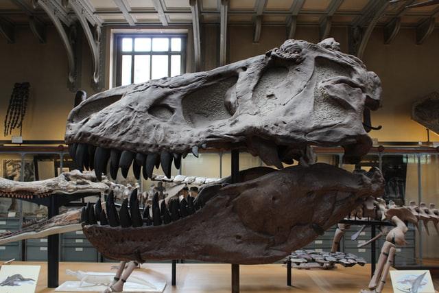 Огромный интерес к палеонтологии выражали ученые во время эпохи Возрождения: Леонардо да Винчи, Джироламо Фракасторо или Бернар Палисси