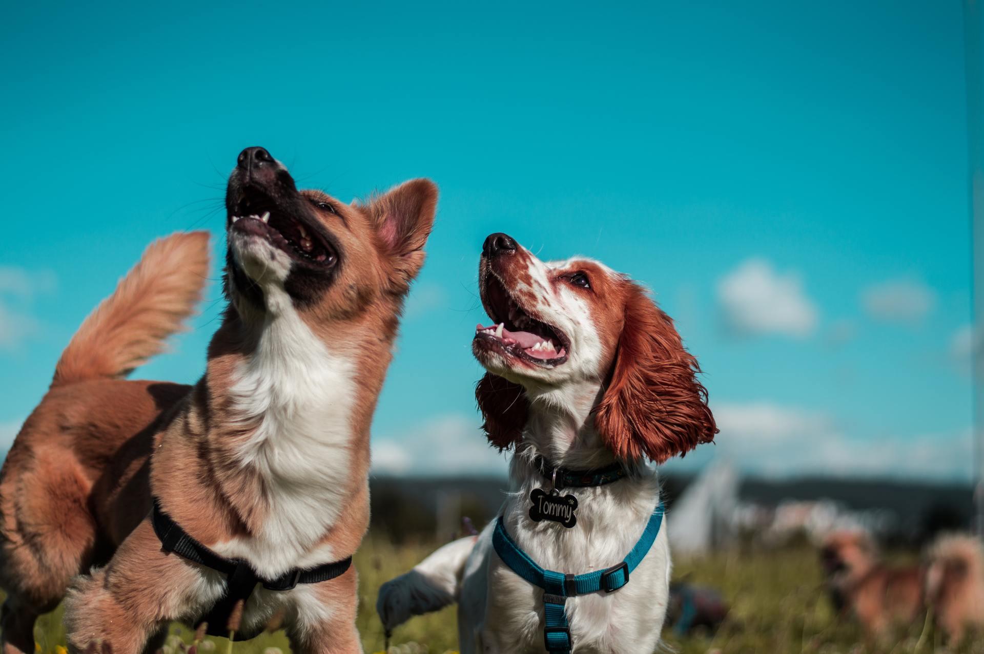 Дружелюбные, преданные, верные – собаки всегда заодно с человеком. Существуют ли более трогательные истории, чем те, которые рассказывают в фильмах про собак?
